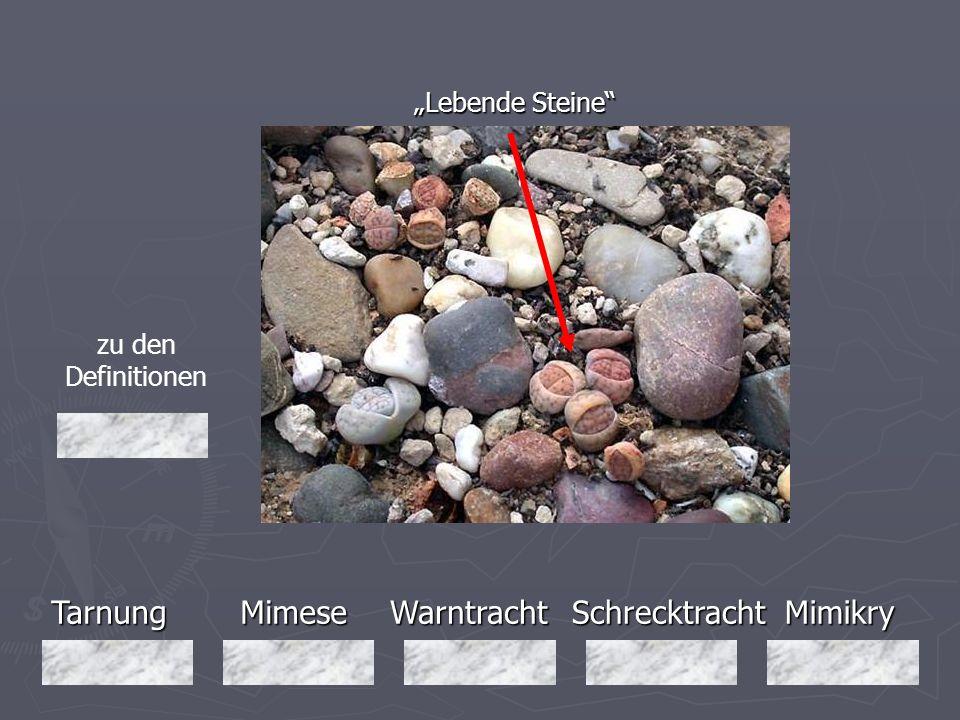 TarnungMimeseMimikryWarntrachtSchrecktracht Lebende Steine zu den Definitionen