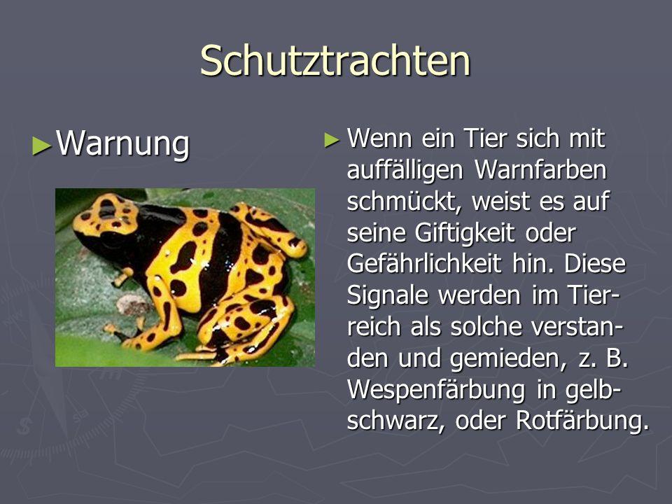 Schutztrachten Warnung Warnung Wenn ein Tier sich mit auffälligen Warnfarben schmückt, weist es auf seine Giftigkeit oder Gefährlichkeit hin.