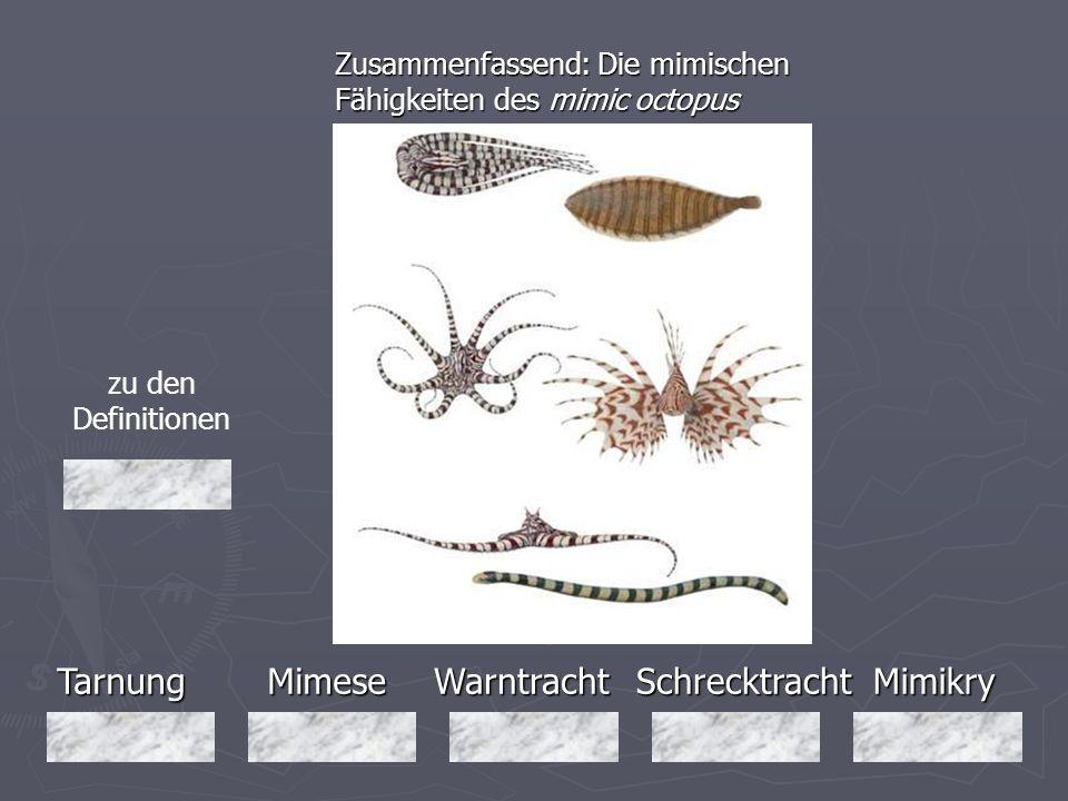 TarnungMimeseMimikryWarntrachtSchrecktracht Zusammenfassend: Die mimischen Fähigkeiten des mimic octopus zu den Definitionen