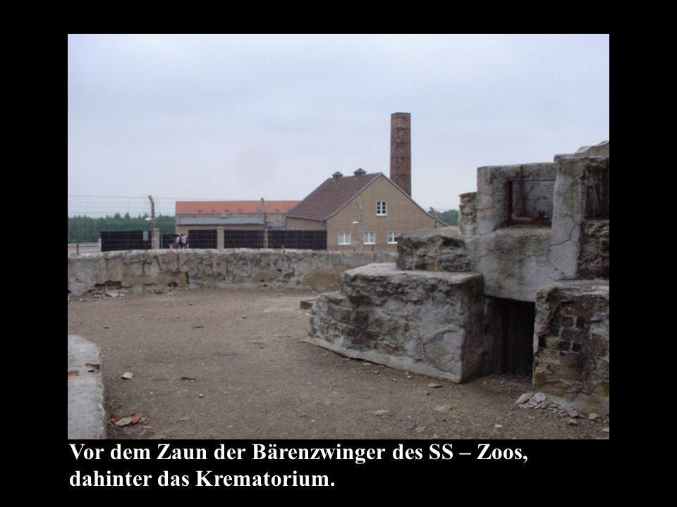 Vor dem Zaun der Bärenzwinger des SS – Zoos, dahinter das Krematorium.