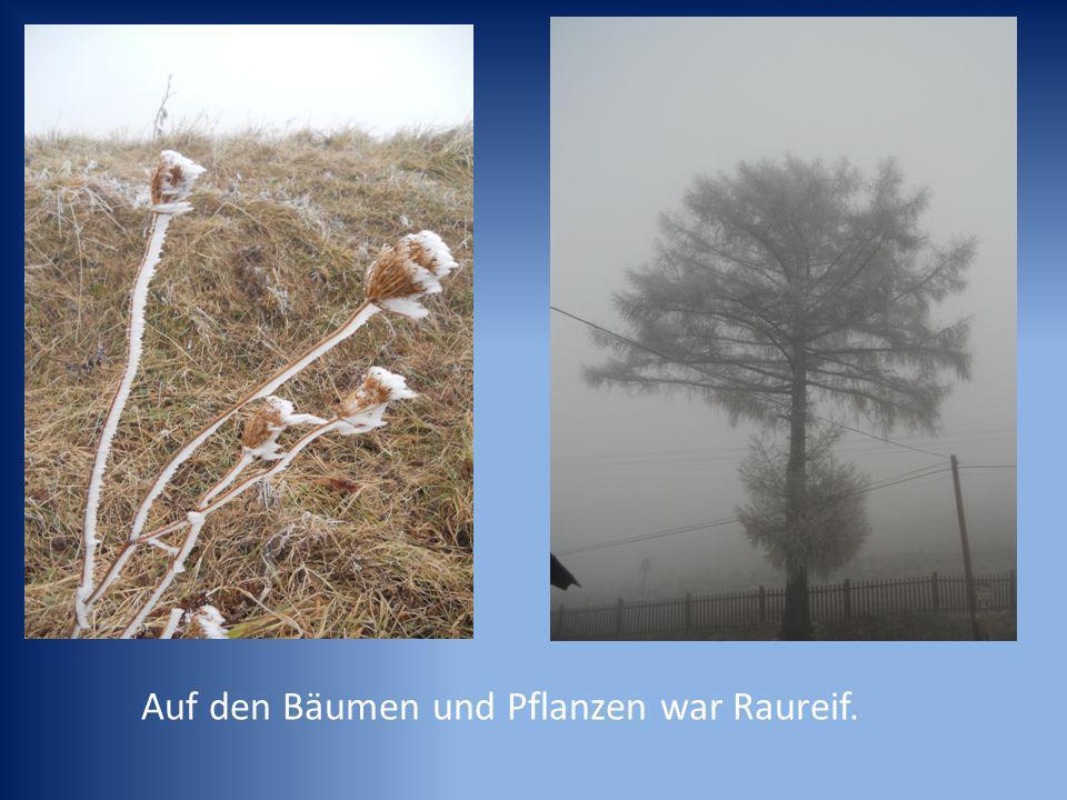 Auf den Bäumen und Pflanzen war Raureif.
