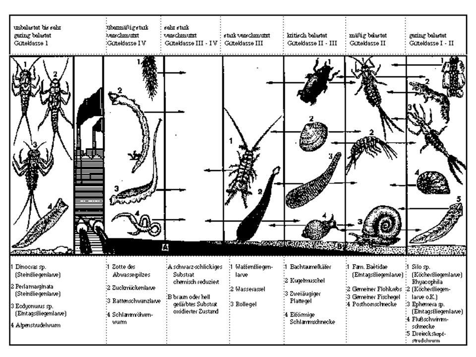 Organische Belastung und Sauerstoff in Fliessgewässern (2) Quantitative Beschreibung –Transportgleichungen für BSB 5 und gelösten Sauerstoff –BSB 5 (Senke: Abbau erster Ordnung), Formelzeichen L (mg/l) –Gelöster Sauerstoff (Senke BSB-Abbau, Quelle Wiederbelüftung), Formelzeichen c (mg/l) q seitl.