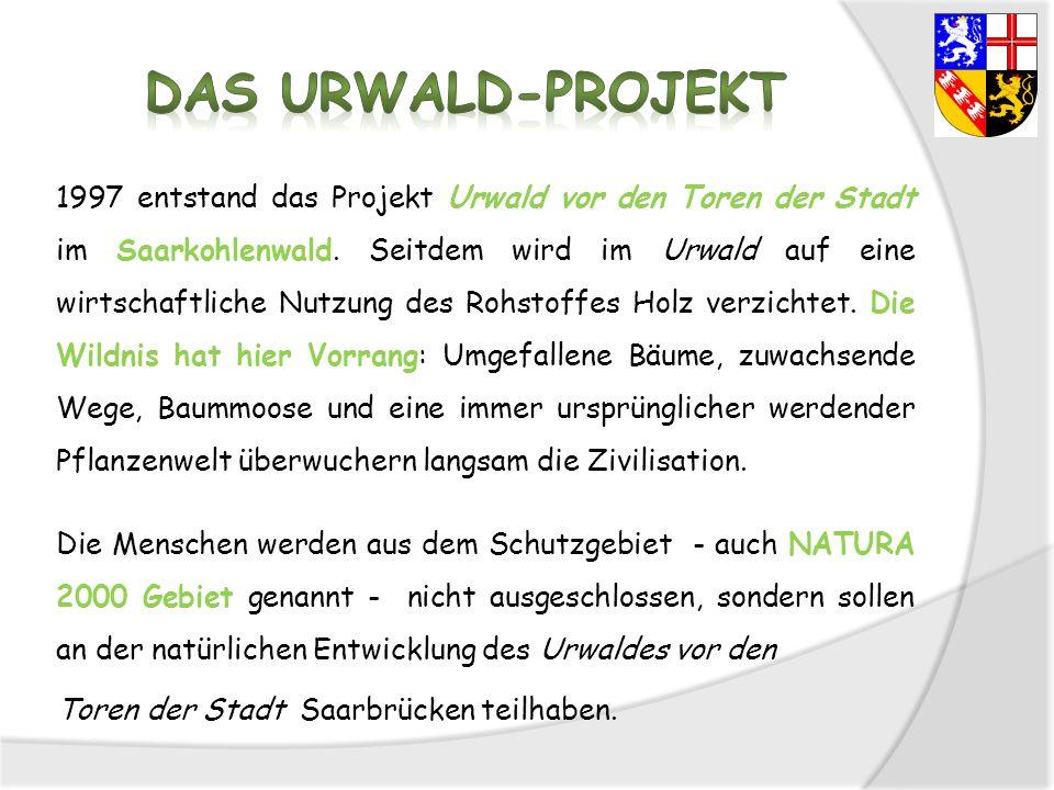 1997 entstand das Projekt Urwald vor den Toren der Stadt im Saarkohlenwald. Seitdem wird im Urwald auf eine wirtschaftliche Nutzung des Rohstoffes Hol