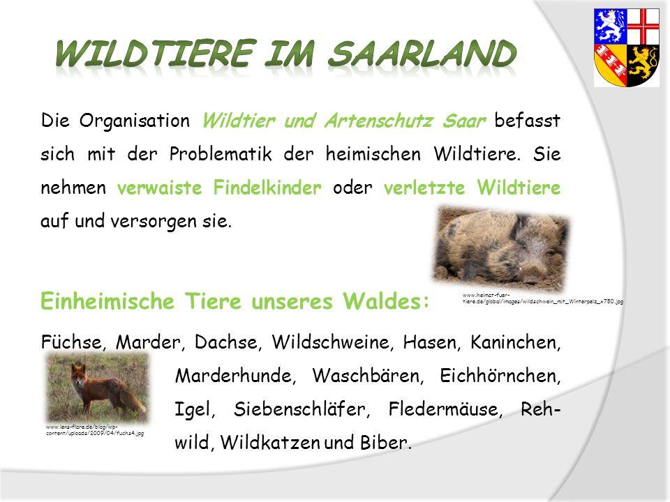 Die Organisation Wildtier und Artenschutz Saar befasst sich mit der Problematik der heimischen Wildtiere. Sie nehmen verwaiste Findelkinder oder verle