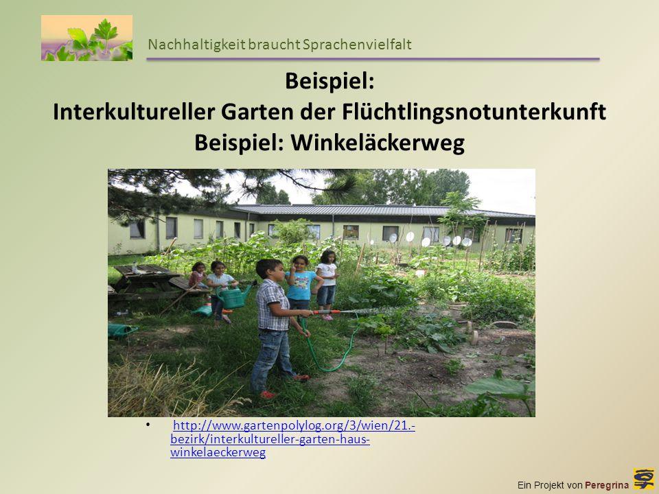 Ein Projekt von Peregrina Nachhaltigkeit braucht Sprachenvielfalt Beispiel: Interkultureller Garten der Flüchtlingsnotunterkunft Beispiel: Winkeläcker