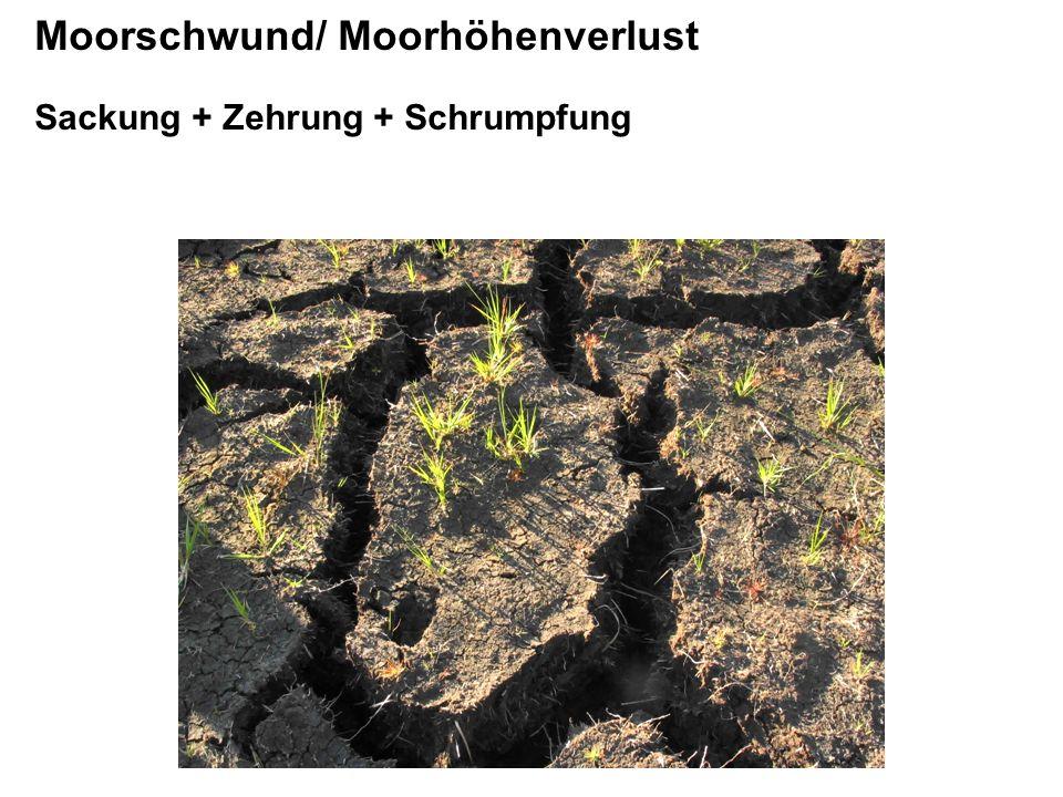 GW 0, 5 m unter Flur GW 1 m unter Flur Beispiel für Moorschwund/ Moorhöhenverlust 5 m Torfsäule, vorentwässert, Erdfen, Grundwasser- absenkung von 0,5 auf 1 m unter Flur Sackung - 29 cm (einmalig) Schrumpfung/ Quellung +/- 5 cm Zehrung - 1 cm/a