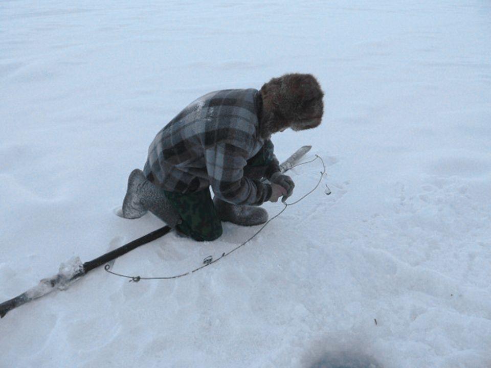 Beim Fischen dauert es nur 30 Sekunden, bis der gefangne Fisch gefroren ist. Im Supermarkt kann man nur gefrorene Milch kaufen.