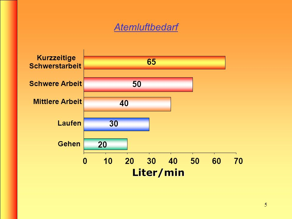 4 Atmung des Menschen Die Atemorgane Luftröhre Bronchien Kapillaren Lungenbläschen (Alveolen) Untere Atemwege