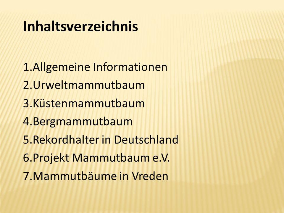 Inhaltsverzeichnis 1.Allgemeine Informationen 2.Urweltmammutbaum 3.Küstenmammutbaum 4.Bergmammutbaum 5.Rekordhalter in Deutschland 6.Projekt Mammutbau