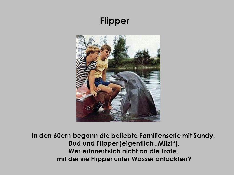 Flipper In den 60ern begann die beliebte Familienserie mit Sandy, Bud und Flipper (eigentlich Mitzi). Wer erinnert sich nicht an die Tröte, mit der si
