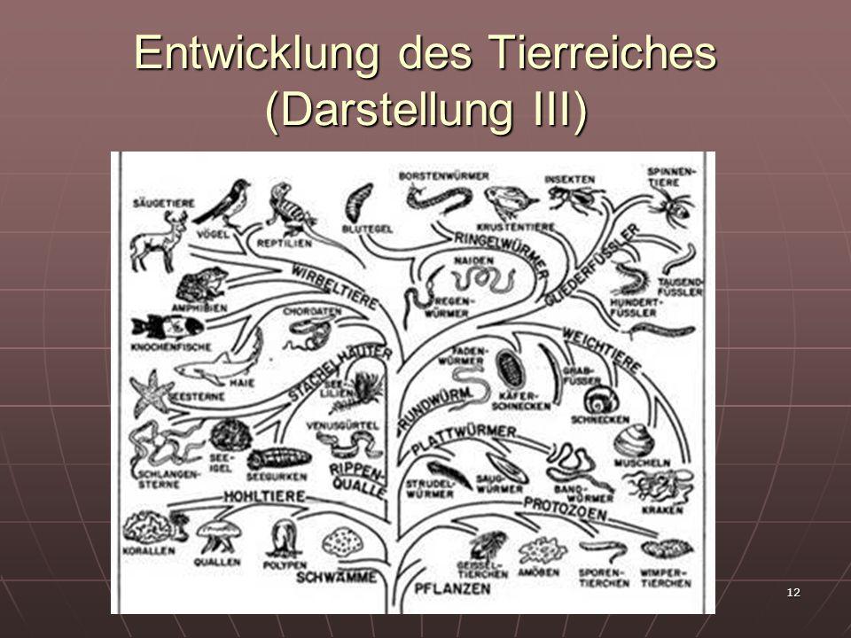 12 Entwicklung des Tierreiches (Darstellung III)