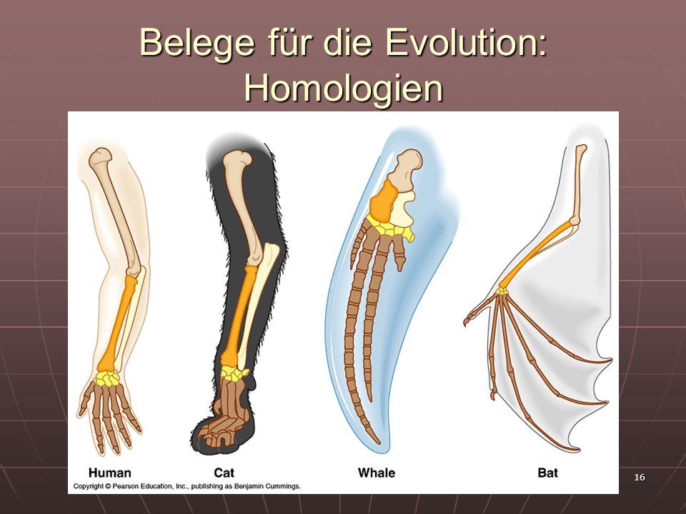 16 Belege für die Evolution: Homologien