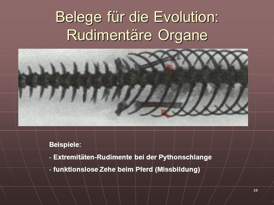 18 Belege für die Evolution: Rudimentäre Organe Beispiele: - Extremitäten-Rudimente bei der Pythonschlange - funktionslose Zehe beim Pferd (Missbildun