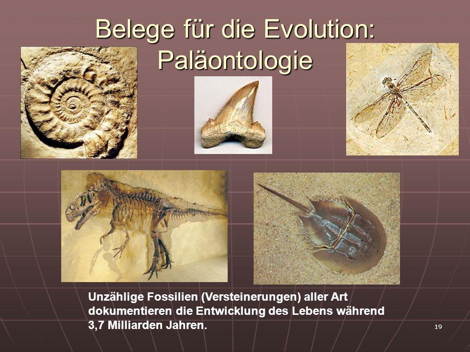 19 Belege für die Evolution: Paläontologie Unzählige Fossilien (Versteinerungen) aller Art dokumentieren die Entwicklung des Lebens während 3,7 Millia