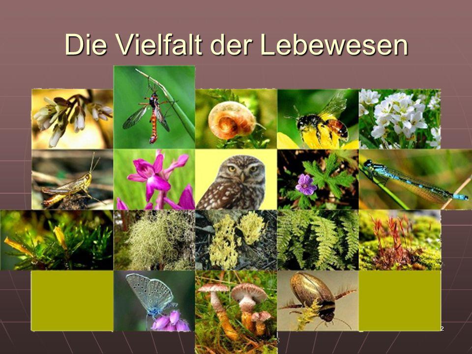 13 Entwicklung des Tierreiches (Darstellung IV) Die Grossgruppen des Tierreiches in evolutionärer Abfolge