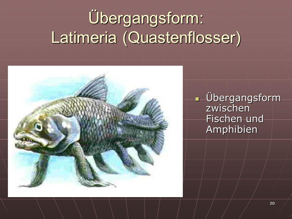 20 Übergangsform: Latimeria (Quastenflosser) Übergangsform zwischen Fischen und Amphibien Übergangsform zwischen Fischen und Amphibien