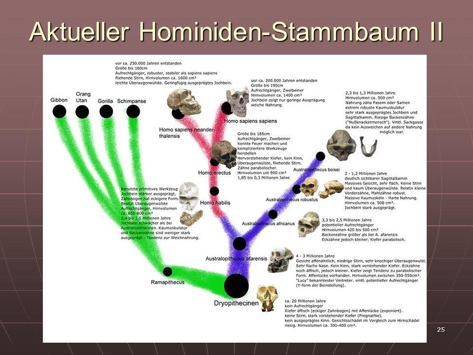 25 Aktueller Hominiden-Stammbaum II