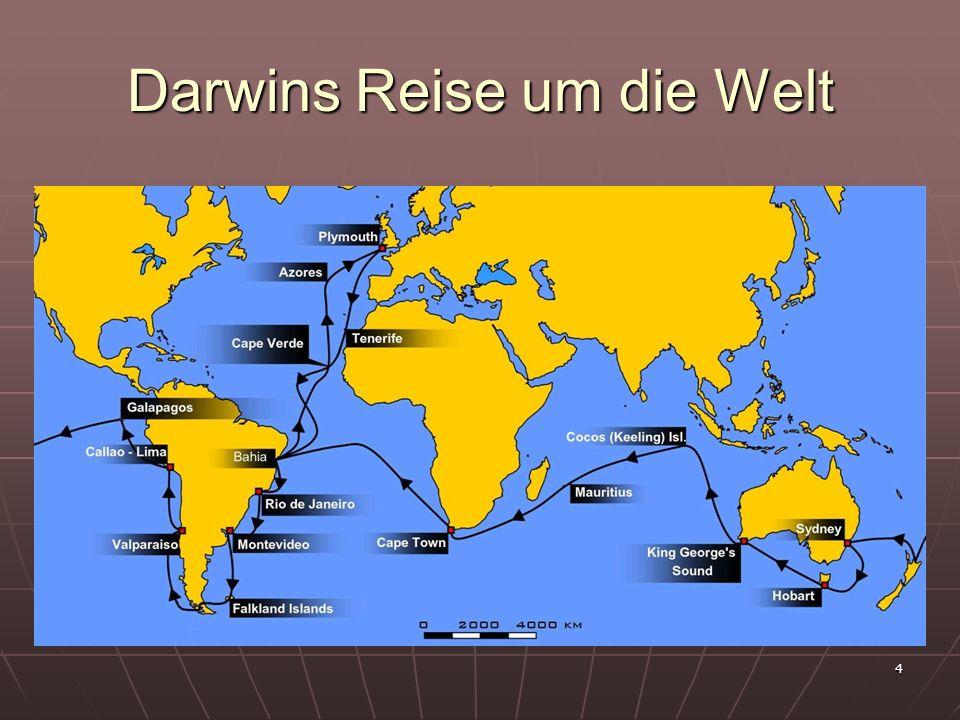 5 Darwins Schlussfolgerungen I Die Überproduktion von Nachkommen führt unter den Individuen der Population (Fortpflanzungsgemeinschaft) zu einem Kampf ums Dasein.