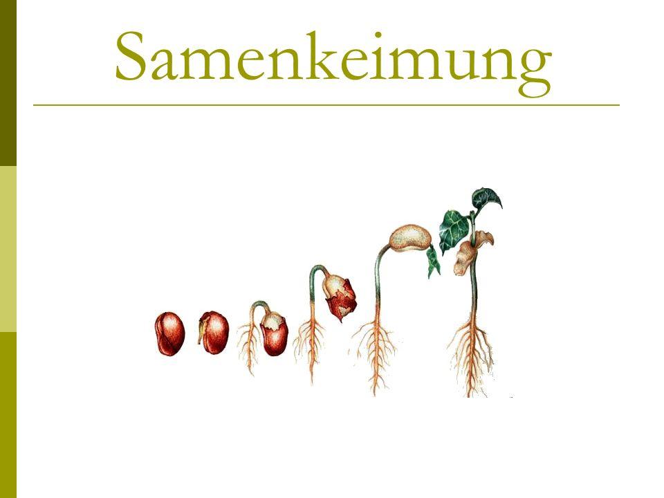 Samen Allgemein Samenaufbau Induzierung der Keimung Vorgang der Keimung