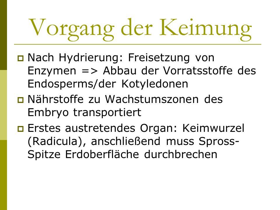 Vorgang der Keimung Nach Hydrierung: Freisetzung von Enzymen => Abbau der Vorratsstoffe des Endosperms/der Kotyledonen Nährstoffe zu Wachstumszonen de