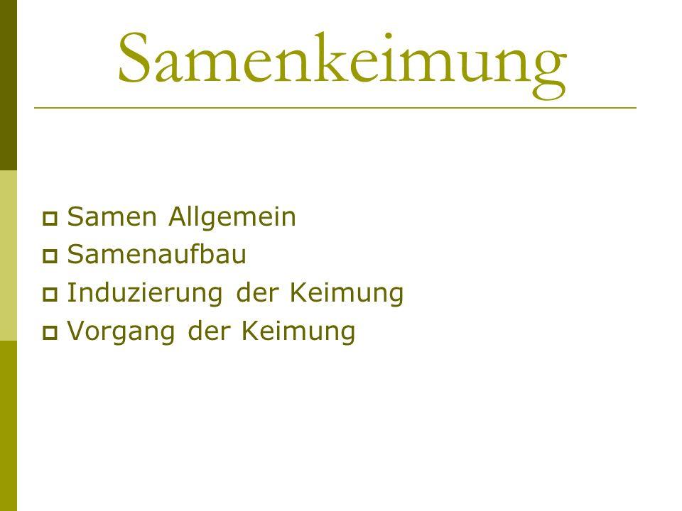 Samen Allgemein Same = charakteristische Verbreiterungseinheit der Spermatophyten, Überdauerungszustand (insbes.