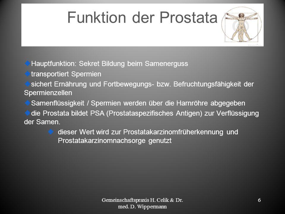 6 Funktion der Prostata Hauptfunktion: Sekret Bildung beim Samenerguss transportiert Spermien sichert Ernährung und Fortbewegungs- bzw. Befruchtungsfä
