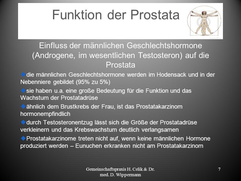 7 Funktion der Prostata Einfluss der männlichen Geschlechtshormone (Androgene, im wesentlichen Testosteron) auf die Prostata die männlichen Geschlecht