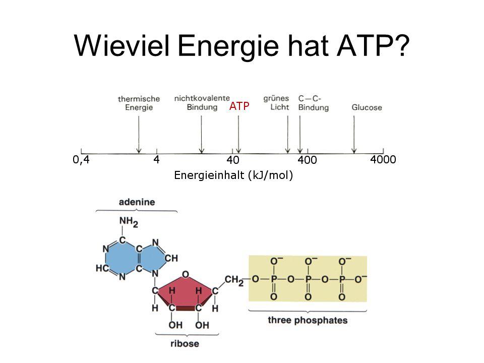 Wieviel Energie hat ATP?