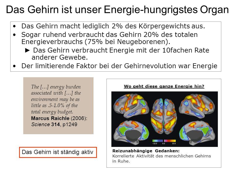 Das Gehirn ist unser Energie-hungrigstes Organ Reizunabhängige Gedanken: Korrelierte Aktivität des menschlichen Gehirns in Ruhe. The […] energy burden