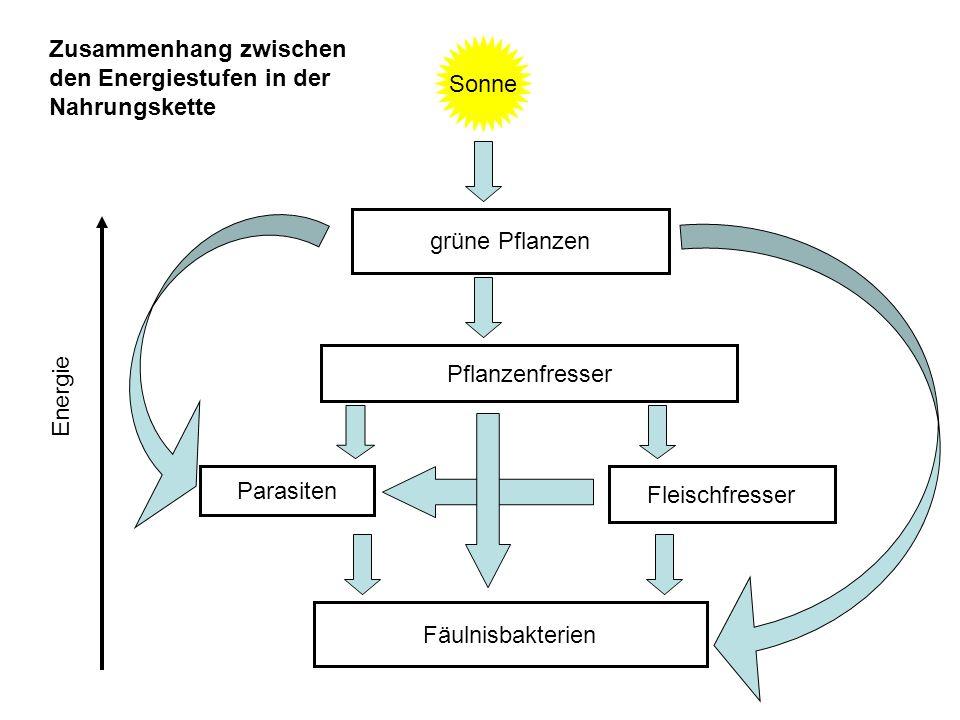 Sonne grüne Pflanzen Pflanzenfresser Fleischfresser Parasiten Fäulnisbakterien Zusammenhang zwischen den Energiestufen in der Nahrungskette Energie