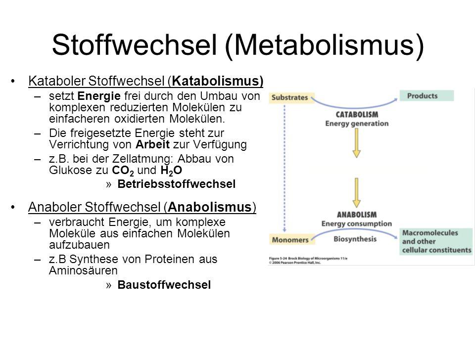 Stoffwechsel (Metabolismus) Kataboler Stoffwechsel (Katabolismus) –setzt Energie frei durch den Umbau von komplexen reduzierten Molekülen zu einfacher