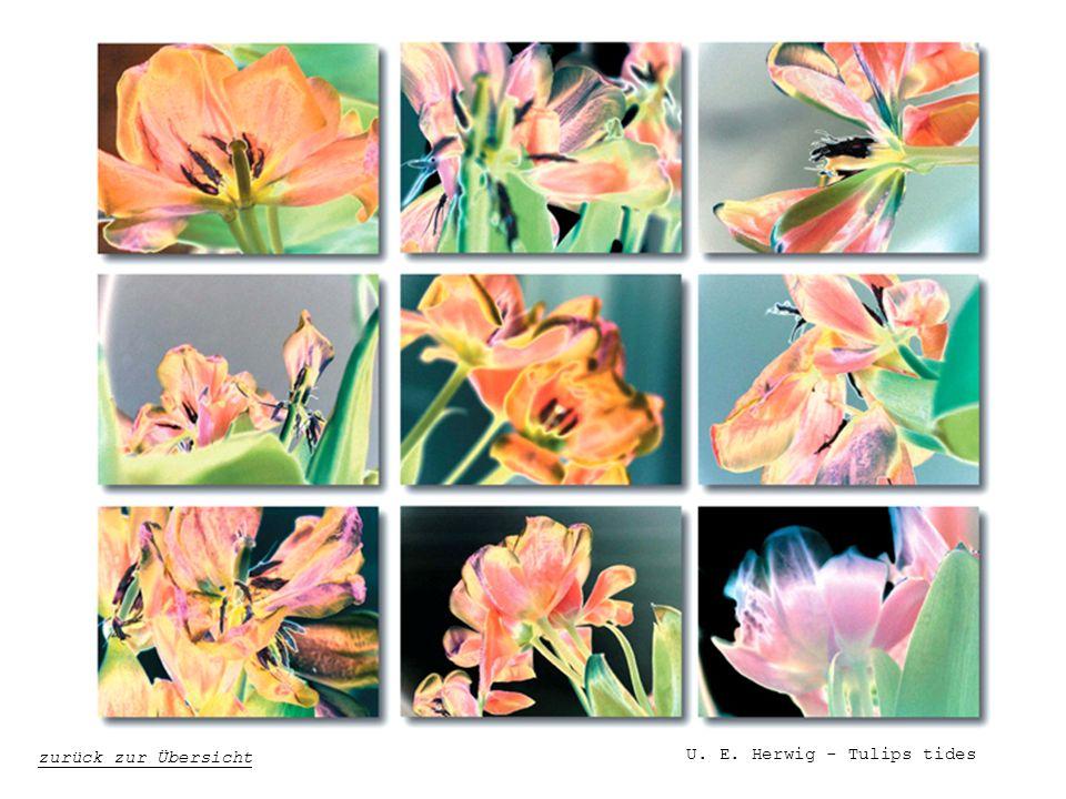 U. E. Herwig - Tulips tides zurück zur Übersicht