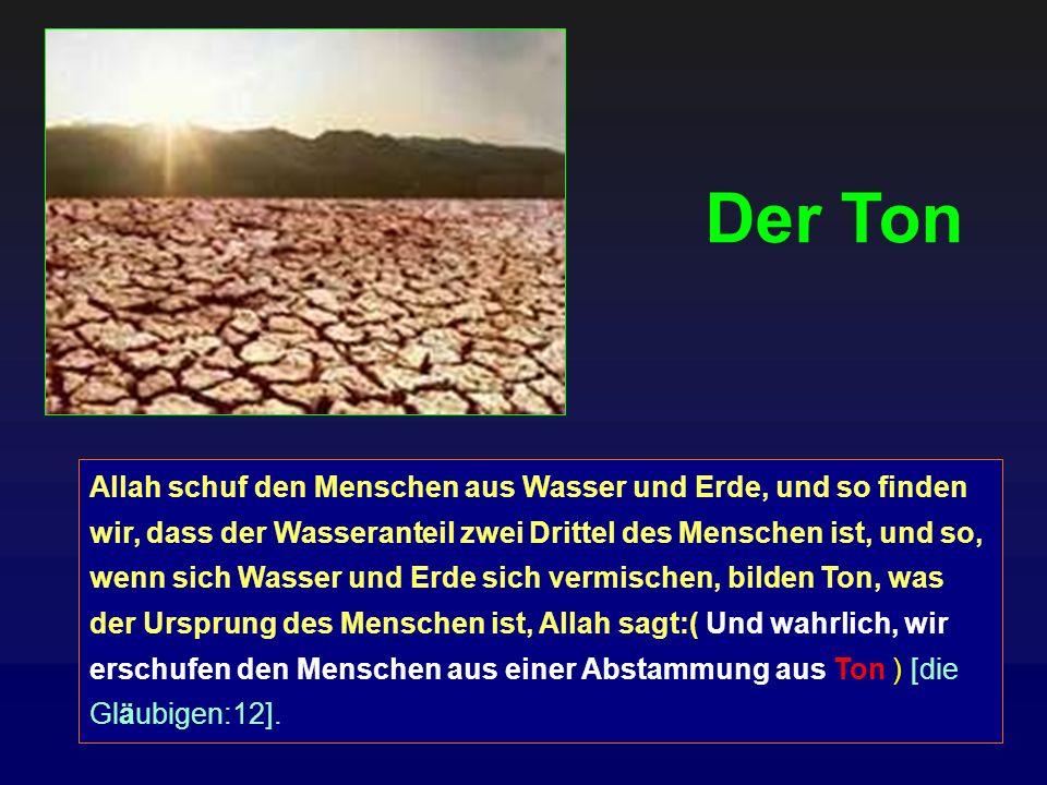 Allah schuf den Menschen aus Wasser und Erde, und so finden wir, dass der Wasseranteil zwei Drittel des Menschen ist, und so, wenn sich Wasser und Erd