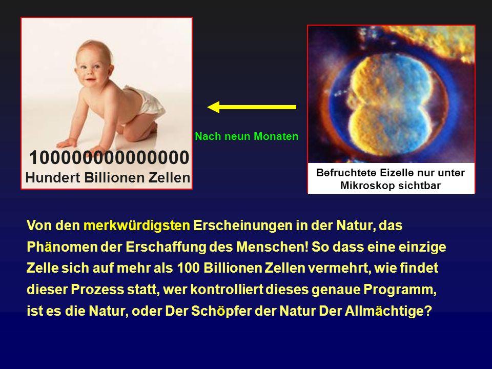 100000000000000 Hundert Billionen Zellen Befruchtete Eizelle nur unter Mikroskop sichtbar Nach neun Monaten Von den merkwürdigsten Erscheinungen in de
