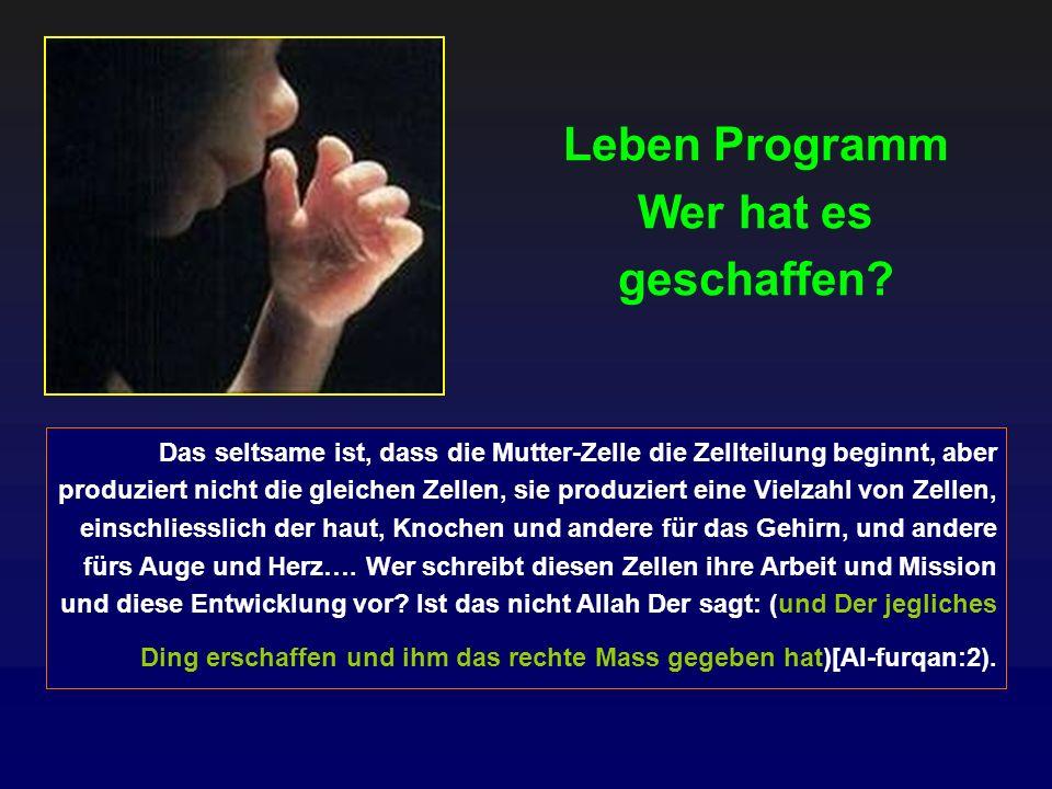 Entwicklungs phasen des Embryos im Koran