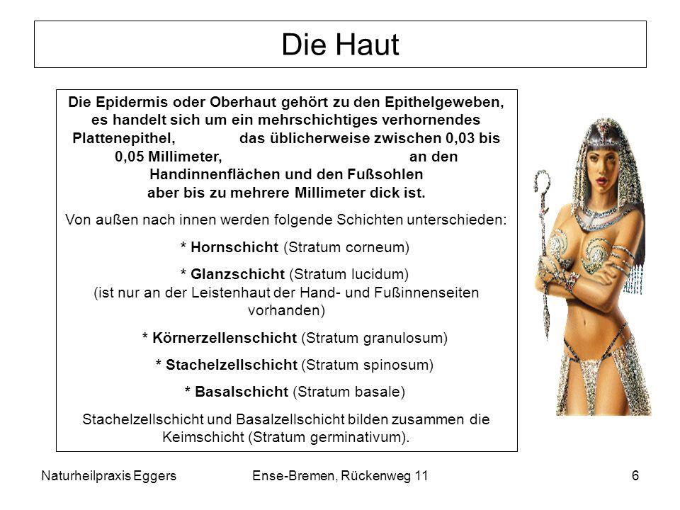 Naturheilpraxis EggersEnse-Bremen, Rückenweg 116 Die Haut Die Epidermis oder Oberhaut gehört zu den Epithelgeweben, es handelt sich um ein mehrschicht