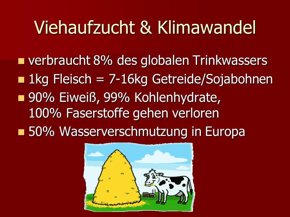 Viehaufzucht & Klimawandel verbraucht 8% des globalen Trinkwassers verbraucht 8% des globalen Trinkwassers 1kg Fleisch = 7-16kg Getreide/Sojabohnen 1kg Fleisch = 7-16kg Getreide/Sojabohnen 90% Eiweiß, 99% Kohlenhydrate, 100% Faserstoffe gehen verloren 90% Eiweiß, 99% Kohlenhydrate, 100% Faserstoffe gehen verloren 50% Wasserverschmutzung in Europa 50% Wasserverschmutzung in Europa