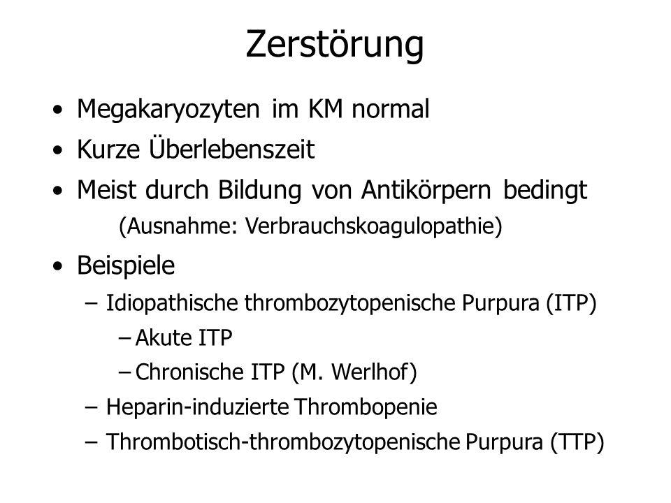 Zerstörung Megakaryozyten im KM normal Kurze Überlebenszeit Meist durch Bildung von Antikörpern bedingt (Ausnahme: Verbrauchskoagulopathie) Beispiele