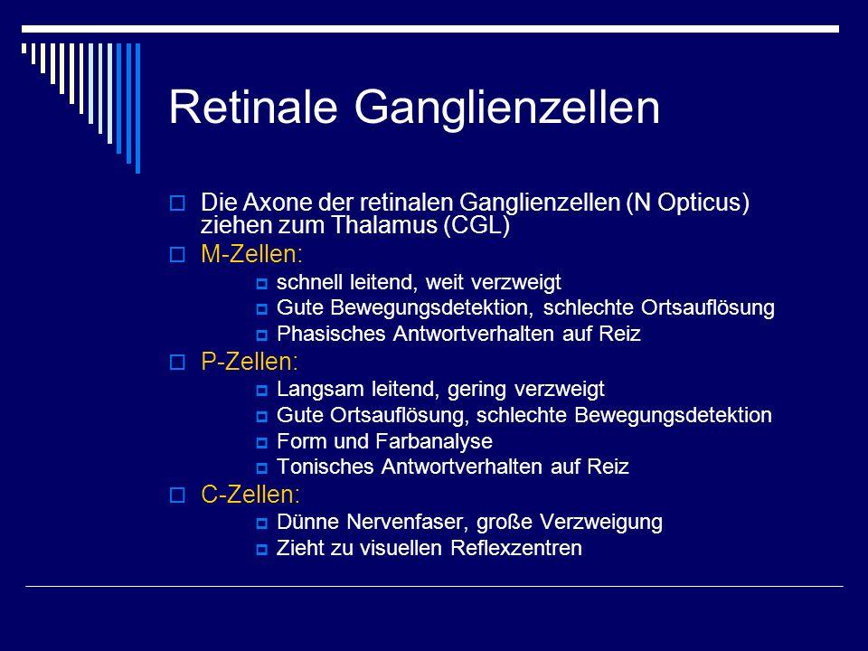 Retinale Ganglienzellen Die Axone der retinalen Ganglienzellen (N Opticus) ziehen zum Thalamus (CGL) M-Zellen: schnell leitend, weit verzweigt Gute Be