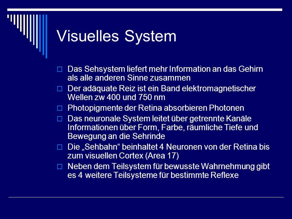 Visuelles System Retino-genikulo-kortikales System (bewusste Wahrnehmung von visuellen Stimuli) Retino-prätektales System (Regulation der Pupillomotorik und Akkomodation) Retino-tektales System (Koordination von Augen- mit Kopf- und Rumpfbewegungen) Akzessorisches optisches System (Okulomotorik) Retino-hypothalamisches System (Hell/dunkel Informationen an zirkadianes System)