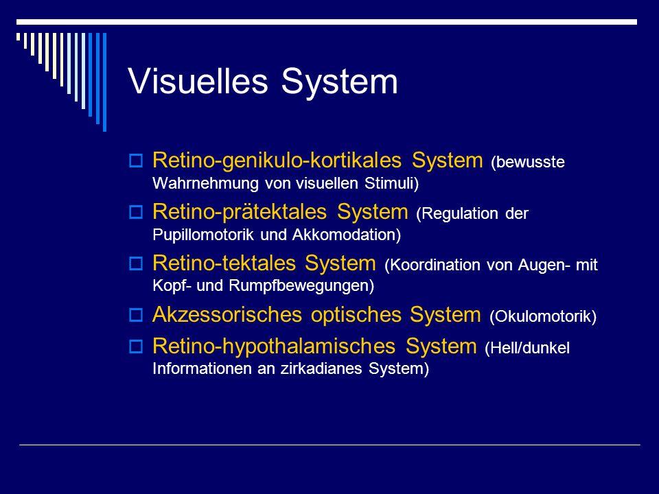 Retinale Ganglienzellen Die Axone der retinalen Ganglienzellen (N Opticus) ziehen zum Thalamus (CGL) M-Zellen: schnell leitend, weit verzweigt Gute Bewegungsdetektion, schlechte Ortsauflösung Phasisches Antwortverhalten auf Reiz P-Zellen: Langsam leitend, gering verzweigt Gute Ortsauflösung, schlechte Bewegungsdetektion Form und Farbanalyse Tonisches Antwortverhalten auf Reiz C-Zellen: Dünne Nervenfaser, große Verzweigung Zieht zu visuellen Reflexzentren