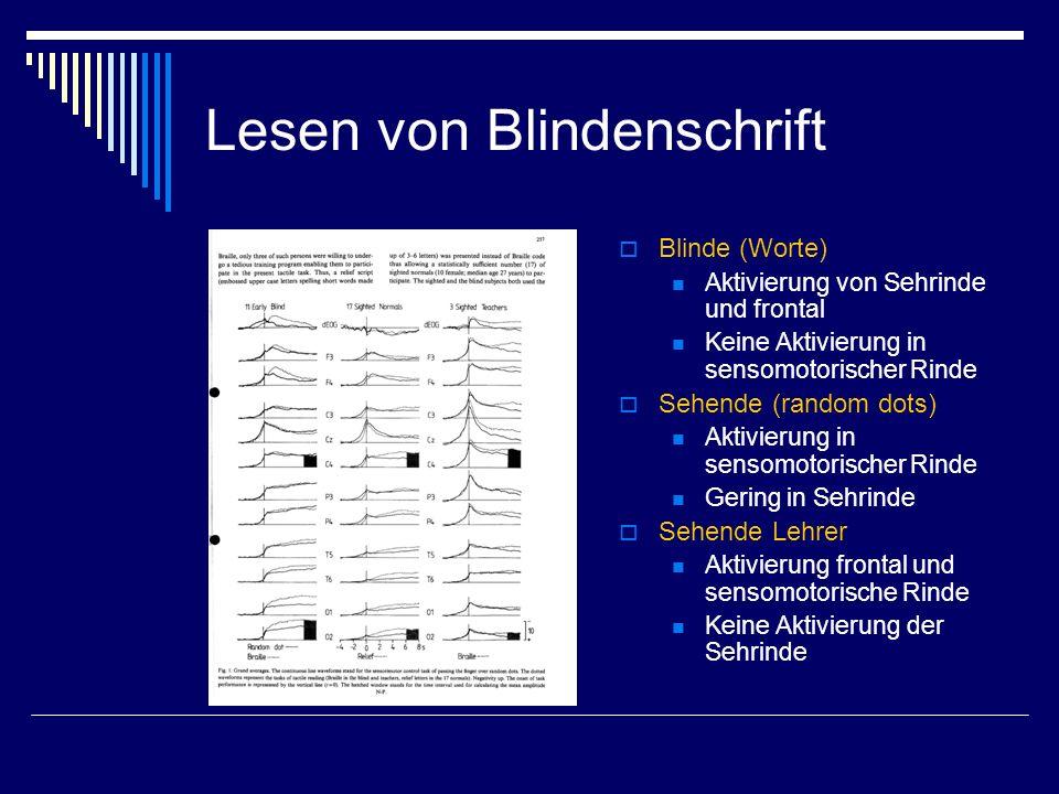 Lesen von Blindenschrift Blinde (Worte) Aktivierung von Sehrinde und frontal Keine Aktivierung in sensomotorischer Rinde Sehende (random dots) Aktivie