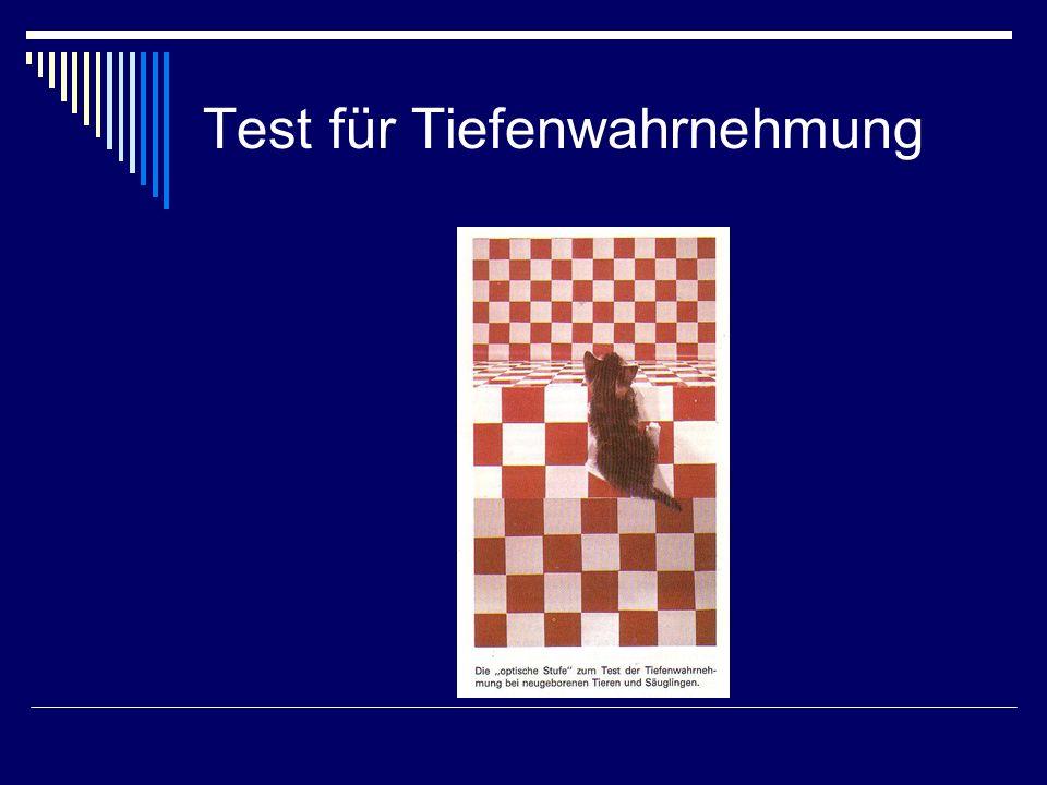 Test für Tiefenwahrnehmung