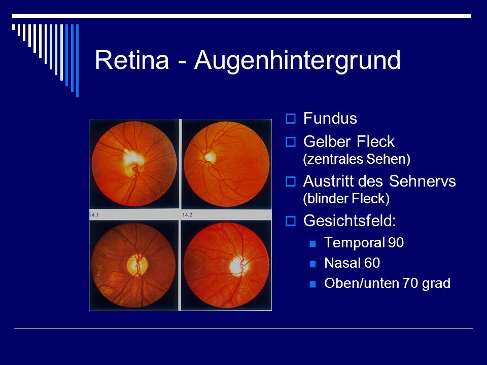 Retina - Augenhintergrund Fundus Gelber Fleck (zentrales Sehen) Austritt des Sehnervs (blinder Fleck) Gesichtsfeld: Temporal 90 Nasal 60 Oben/unten 70
