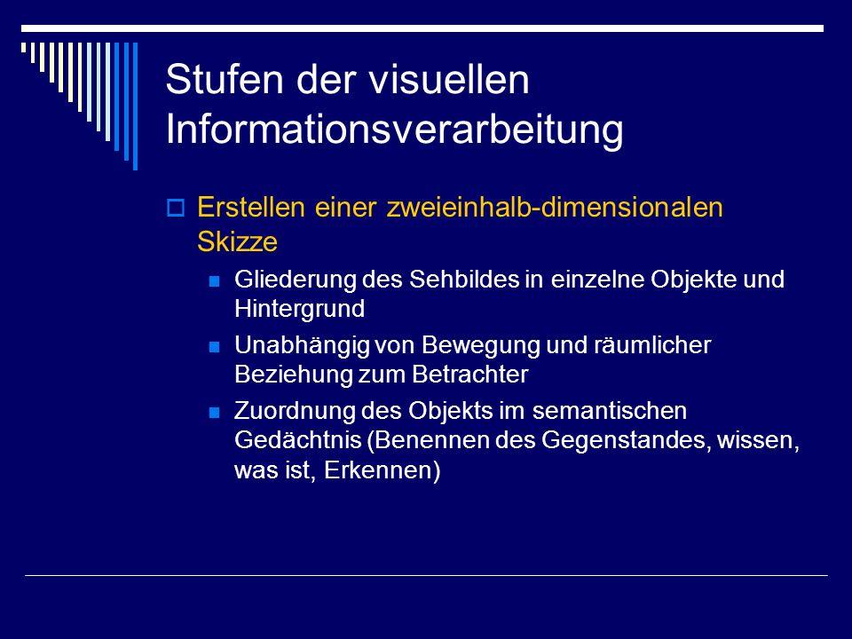 Stufen der visuellen Informationsverarbeitung Erstellen einer zweieinhalb-dimensionalen Skizze Gliederung des Sehbildes in einzelne Objekte und Hinter