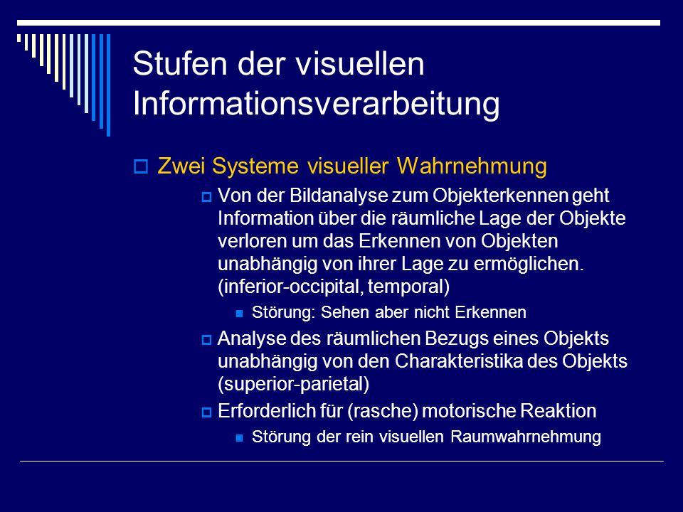 Stufen der visuellen Informationsverarbeitung Zwei Systeme visueller Wahrnehmung Von der Bildanalyse zum Objekterkennen geht Information über die räum