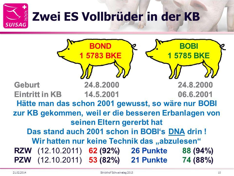 Zwei ES Vollbrüder in der KB 21.02.2014Strickhof Schweinetag 201310 BOBI 1 5785 BKE BOND 1 5783 BKE Geburt24.8.200024.8.2000 Eintritt in KB14.5.200106.6.2001 LTZ(24.1.2001)656 g/Tag624 g/Tag RSD(24.1.2001) 9.2 mm 8.8 mm RZW(05.5.2001)128 (29%) 128 (29%) PZW(05.5.2001)121 (40%)116 (40%) Geburt24.8.200024.8.2000 Eintritt in KB14.5.200106.6.2001 LTZ(24.1.2001)656 g/Tag624 g/Tag RSD(24.1.2001) 9.2 mm 8.8 mm RZW(05.5.2001)128 (29%) 128 (29%) PZW(05.5.2001)121 (40%)116 (40%) RZW(12.10.2011) 62 (92%)26 Punkte 88 (94%) PZW(12.10.2011) 53 (82%)21 Punkte 74 (88%) Hätte man das schon 2001 gewusst, so wäre nur BOBI zur KB gekommen, weil er die besseren Erbanlagen von seinen Eltern gererbt hat Das stand auch 2001 schon in BOBIs DNA drin .
