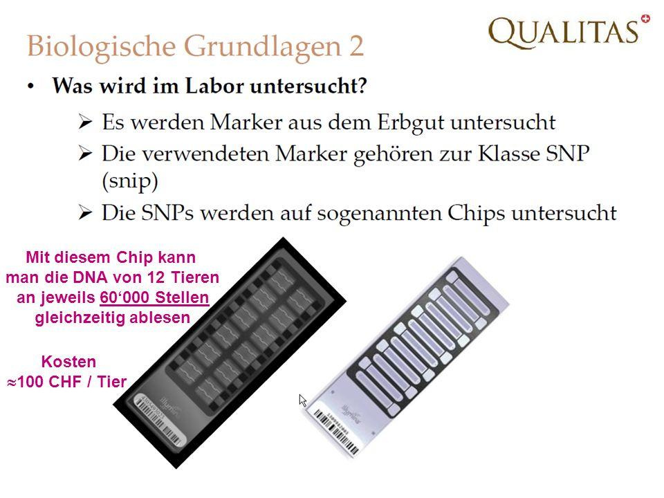 21.02.2014Strickhof Schweinetag 201314 Mit diesem Chip kann man die DNA von 12 Tieren an jeweils 60000 Stellen gleichzeitig ablesen Kosten 100 CHF / Tier