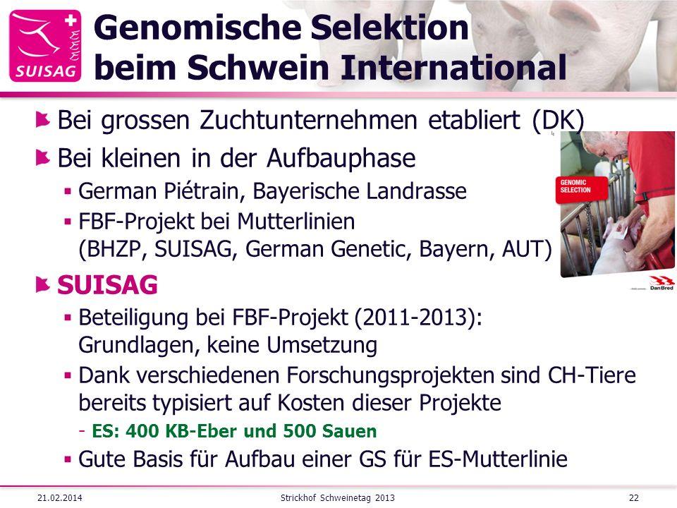 Genomische Selektion beim Schwein International Bei grossen Zuchtunternehmen etabliert (DK) Bei kleinen in der Aufbauphase German Piétrain, Bayerische Landrasse FBF-Projekt bei Mutterlinien (BHZP, SUISAG, German Genetic, Bayern, AUT) SUISAG Beteiligung bei FBF-Projekt (2011-2013): Grundlagen, keine Umsetzung Dank verschiedenen Forschungsprojekten sind CH-Tiere bereits typisiert auf Kosten dieser Projekte  ES: 400 KB-Eber und 500 Sauen Gute Basis für Aufbau einer GS für ES-Mutterlinie 21.02.2014Strickhof Schweinetag 201322