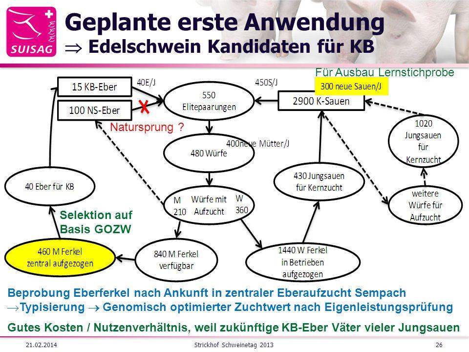 Geplante erste Anwendung Edelschwein Kandidaten für KB 21.02.2014Strickhof Schweinetag 201326 Beprobung Eberferkel nach Ankunft in zentraler Eberaufzu